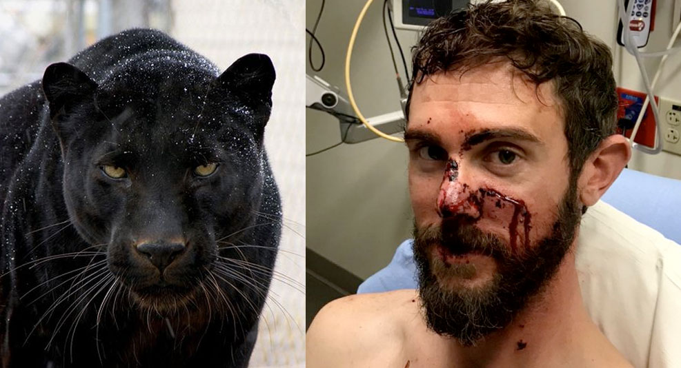 7d6280b83784 UPDATE  Black panther arrested in connection to Colorado MAGA mountain lion  attack